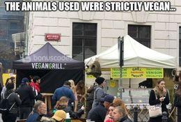 Vegan funny memes